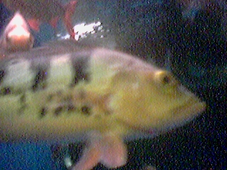 """we live in the projects"" -- another eyemodule photo of within a Bob Strain fish tank..."